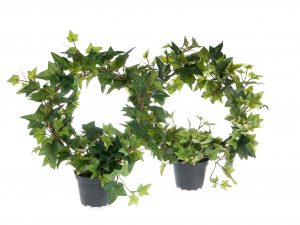 Mr Plant