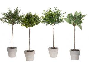 Mr Plant yrttiruukut